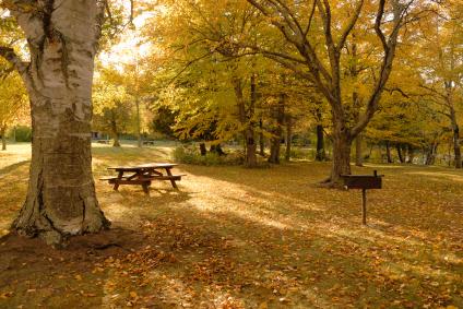 fall_picnic_table