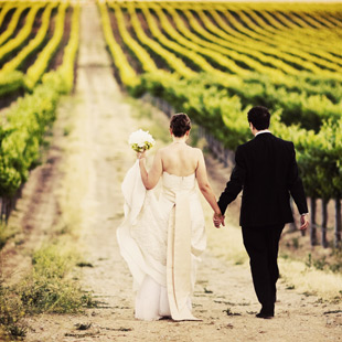 Into-the--Vineyard-Resized
