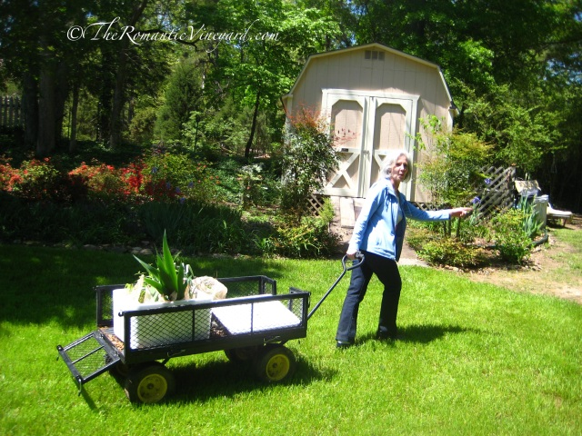 Their daughter, Pam, pulling our wagon full of plants.