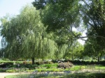 Beautiful Garden with Weeping Willow