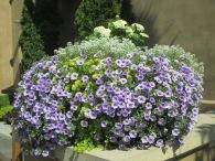 Flowers abound