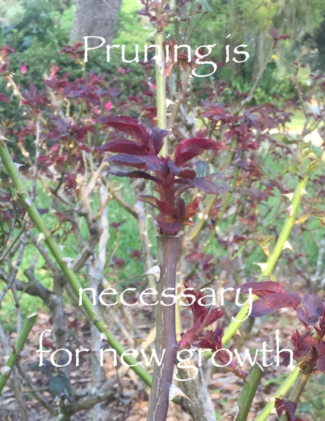 Pruning is necessary for new growth
